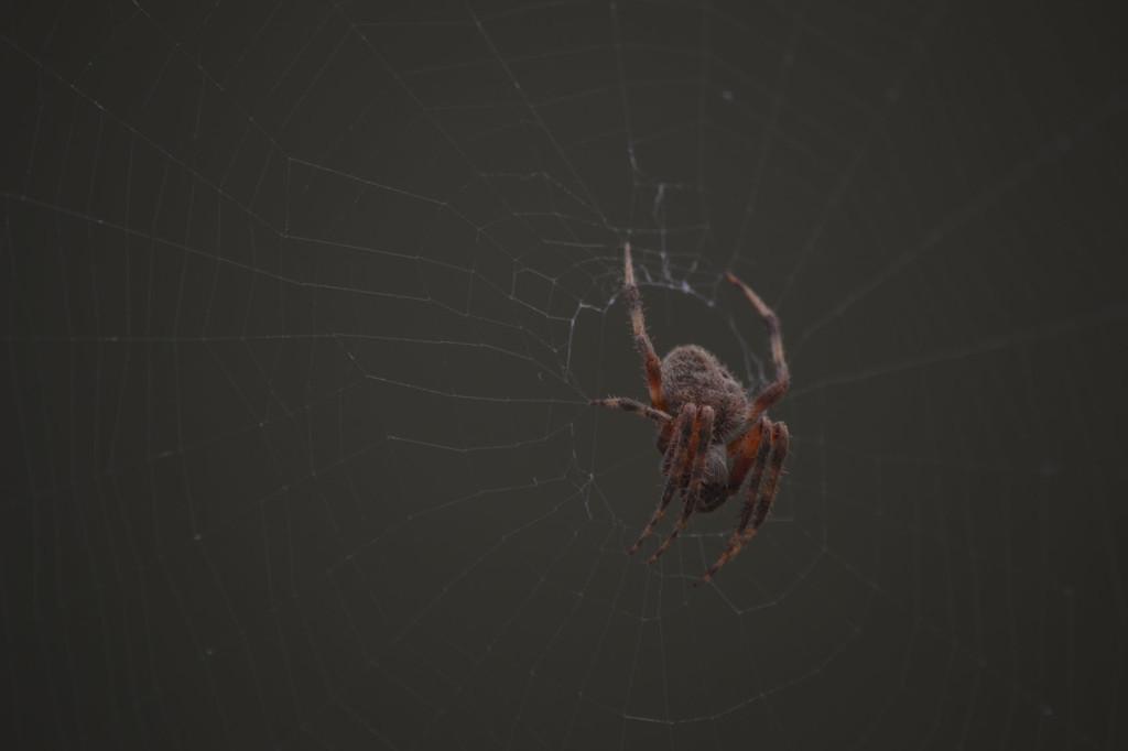 spider web Copyright Sheree Martin