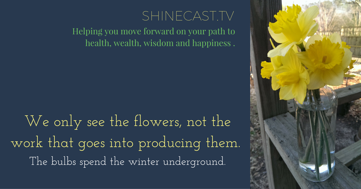 """""""We only see the flowers, not the work that goes into producing them. The bulbs spend the winter underground.""""-Quote by Sheree Martin. Photo of daffodils in jar of water. Shinecast.tv blog post."""