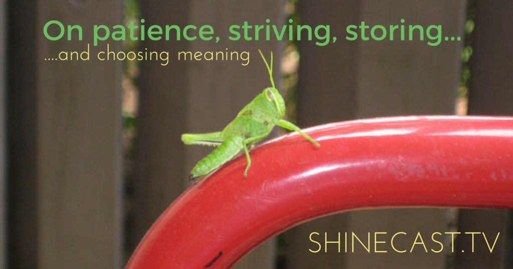 What one grasshopper taught me about patience, striving, responsibility and choosing how to interpret things. https://shinecast.net